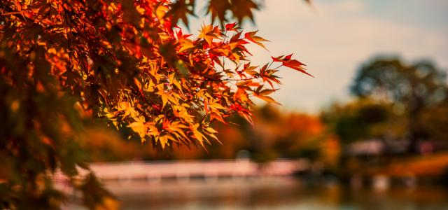 Lake with Japanese maple tree by Lyndon Li